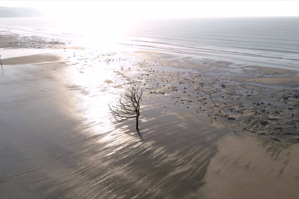 TREE | USING 3D SCANNING TO RAISE CLIMATE CHANGE AWARENESS