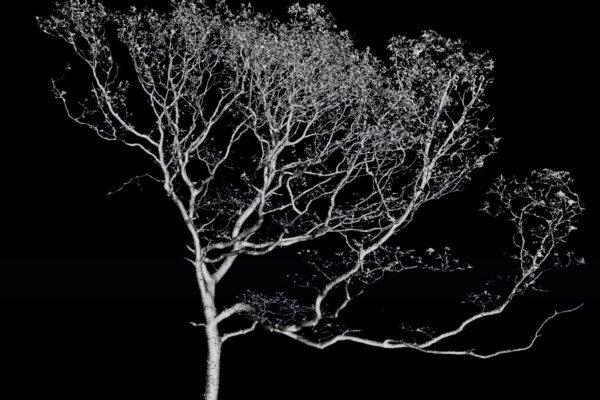 LiDAR + Photogrammetry